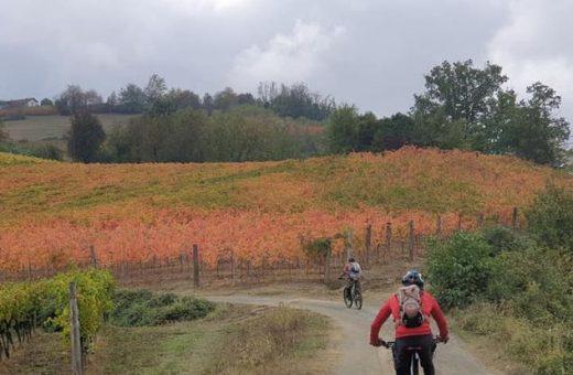 Immagine La via dei vini pregiati