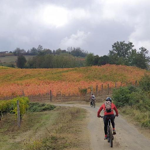 La via dei vini pregiati - Photo